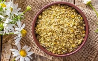 Ромашка при гастрите: компоненты растения, свойства, польза для желудка