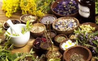 Травы при гастрите желудка: показания и противопоказания, способы применения