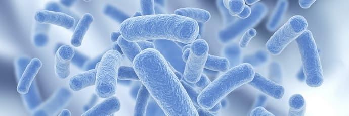 лактобактерии при дисбактериозе
