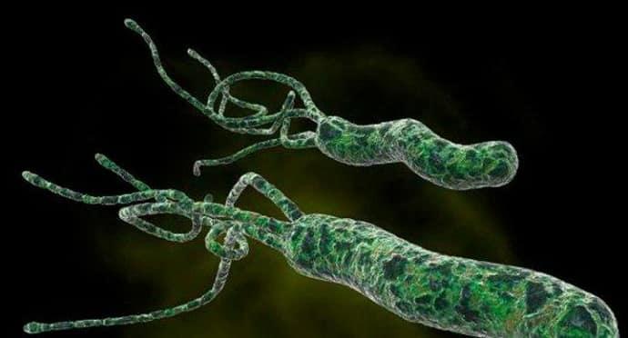 Бактерии вызывающие антральный гастрит