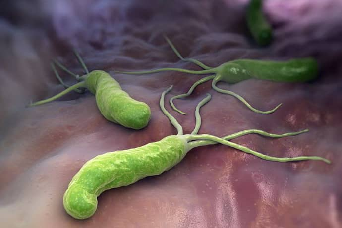 Бактерии вызывающие гастропатию