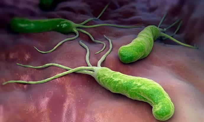 Бактерии вызывающие гастрит