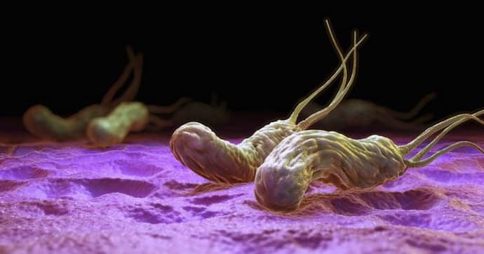 Бактерии при гастрите