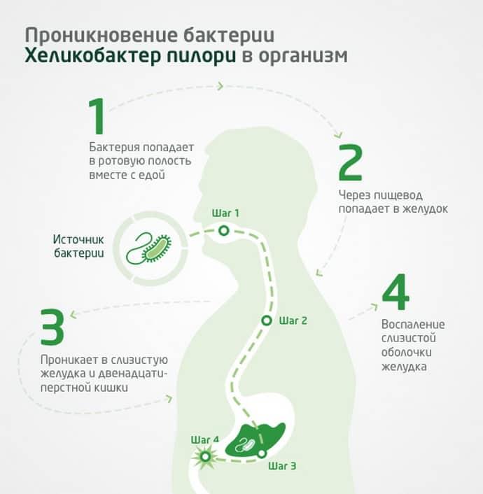 Как приникает бактерия в организм