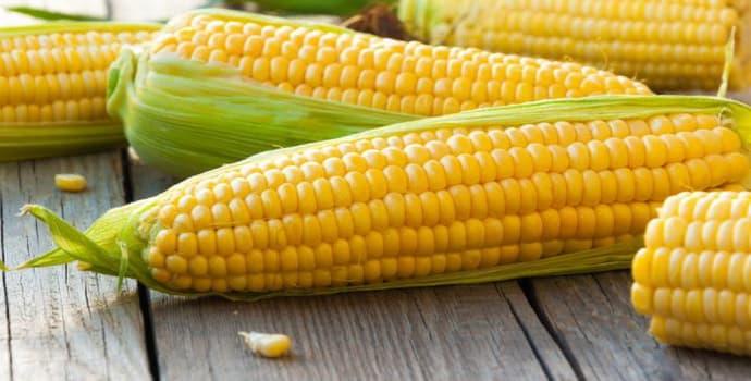 Можно ли вареную кукурузу при гастрите