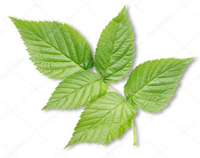 Малиновые листья при гастрите