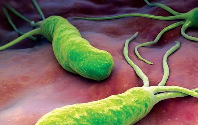 Бактерии вызывающие панеастрит