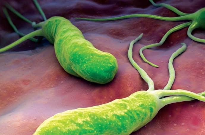 бактерия-причина заражения гастритом