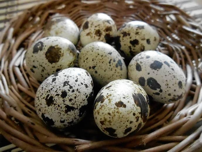 Польза перепиленных яиц