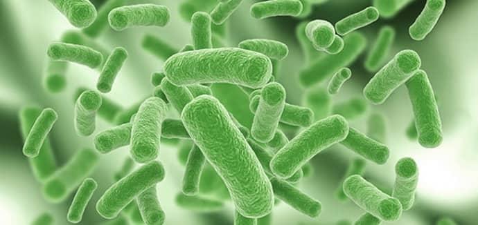Дисбактериоз кишечника лечение в домашних thumbnail