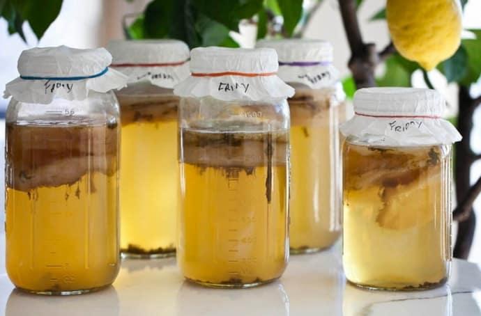 Чайный гриб для лечения дисбактериоза